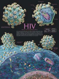 Viruses like Corona and HIV