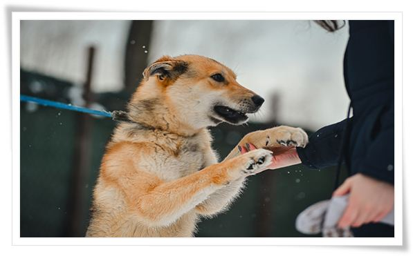 business plan for dog training