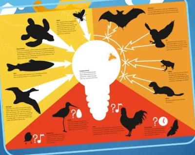 ما هو التلوث الضوئي؟ حقائق مهمة