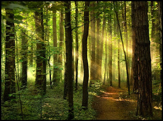 Исцеляющая музыка живого леса