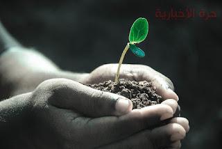 نباتات لا تصلح زراعتها معا في نفس الوقت تعرفي عليها