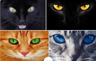 Kenapa Mata Kucing Malam Hari Membesar?