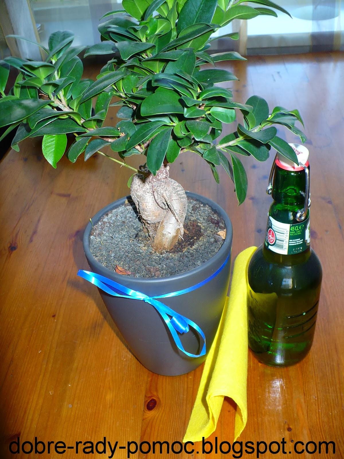 Blog Dobre Rady Pomoc Domowe Sposoby Na Pielęgnację Roślin