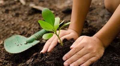 Eight tips to children enjoy home gardening - AWRAQ Community Leaves