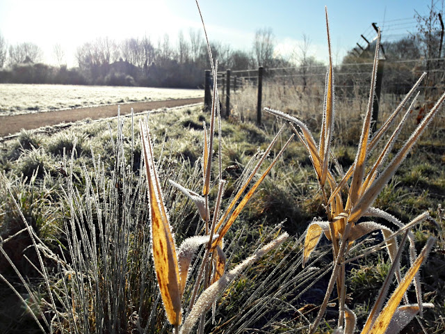 Frosty morning - www.winwickmum.co.uk