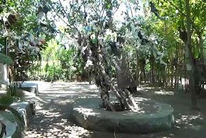 """Di Makam Anak Iwoq, ada pohon """"pembawa keberuntungan"""""""
