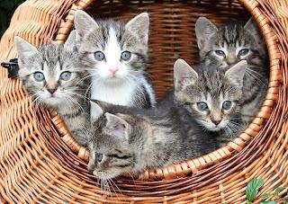 kitties in basket - sisters