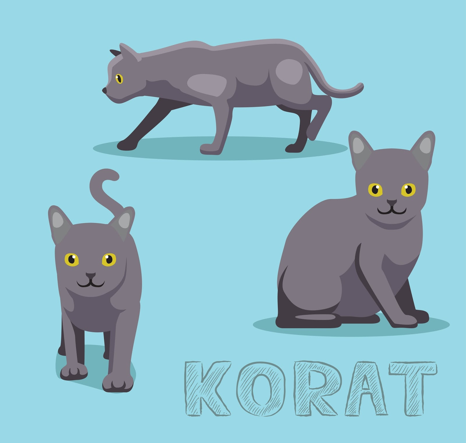 The Cuddlywumps Cat Chronicles The Korat An Ancient Cat Breed
