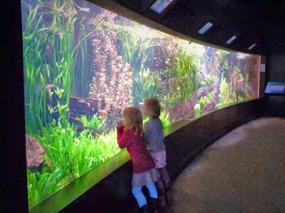 Familienausflug Hamburg in das Tropen Aquarium im Tierpark Hagenbeck