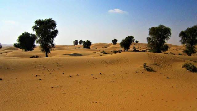 Árvores no Sahara