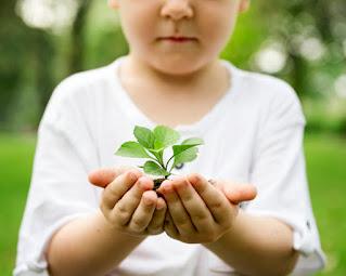 Dia da árvore na Educação Infantil de acordo com a BNCC