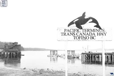 Le Chameau Bleu - Article  sur notre séjour à Tofino Colombie Britannique Canada