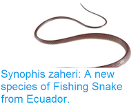 http://sciencythoughts.blogspot.co.uk/2015/12/synophis-zaheri-new-species-of-fishing.html