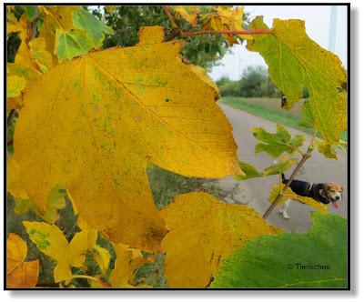 der Hund im Herbst, zwischen bunten Blättern und Zecken