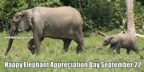 National Elephant Appreciation Day Wishes Awesome Picture