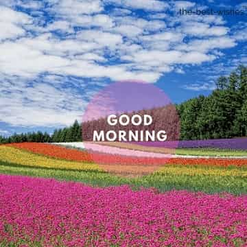 good morning flowers pictures with field flowers colors many