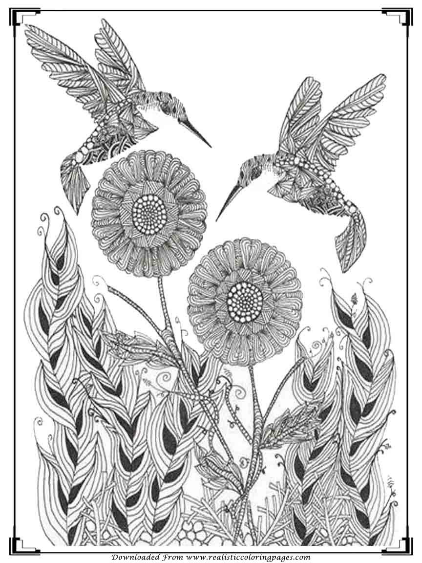 Printable Birds Coloring Pages For Adults | Realistic Coloring Pages
