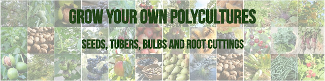 http://www.thepolycultureproject.com/store/c2/Grow_your_Own_Polyculture_.html