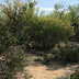 Encuentran fosa clandestina en Nuevo Laredo