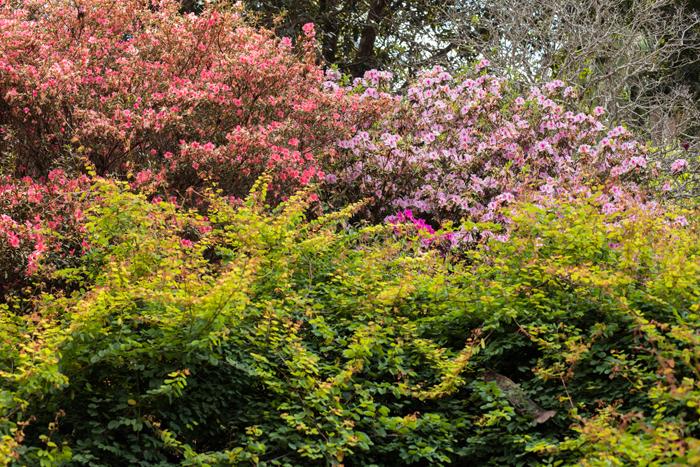 flowering colours noosa botanics