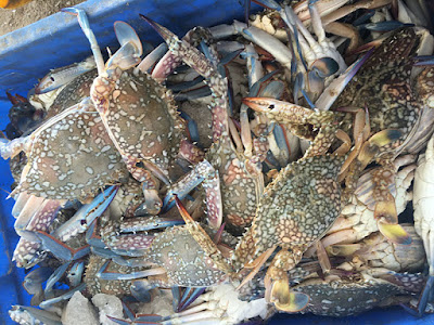 Crab Export Business
