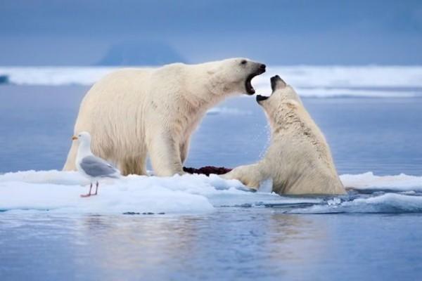 10 Fakta Unik dan Sejarah Penelitian Perubahan Iklim