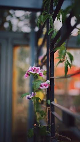 Hoa đẹp trang trí