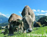 Pengertian peternakan dan #3 jenis peternakan