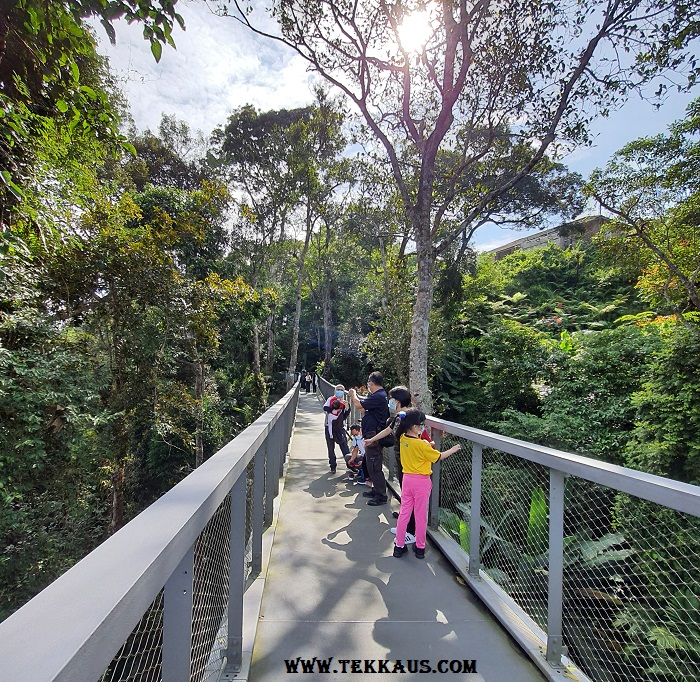 The Habitat Penang Hill Langur Way Canopy Walk