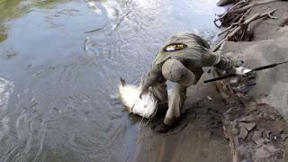 Umpan-Mancing-Ikan-Baung-Sungai