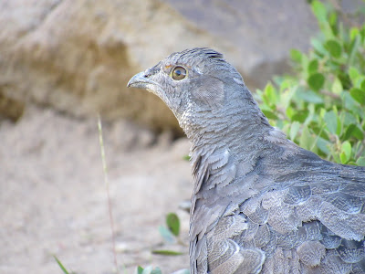 northern california birding