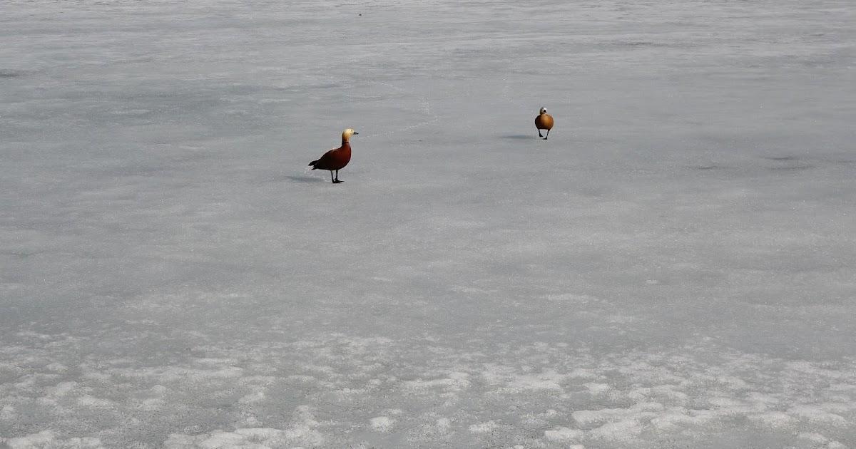 Soapbox photos: Ducks Wait For Snow to Melt