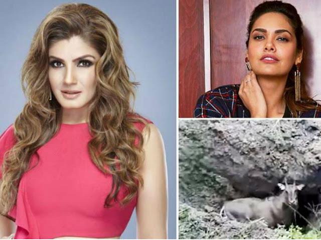 बिहार में नीलगाय को दफनाने वाले वीडियो पर रवीना टंडन, ईशा गुप्ता और अन्य सेलेब्स ने जताया गुस्सा