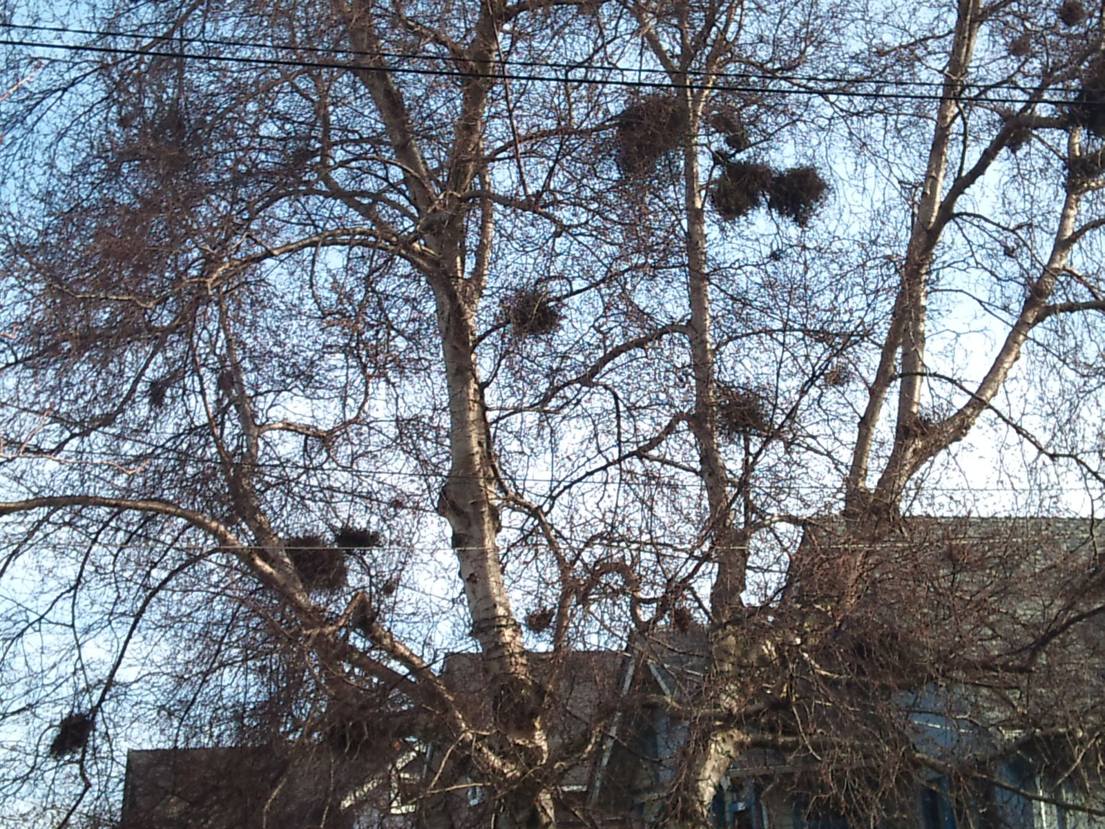 have seen nests in trees. 1600 x 1200.Pubic Hairstyles Images