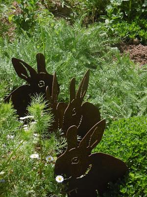 Parc le bournat,lapins paquerette malooka