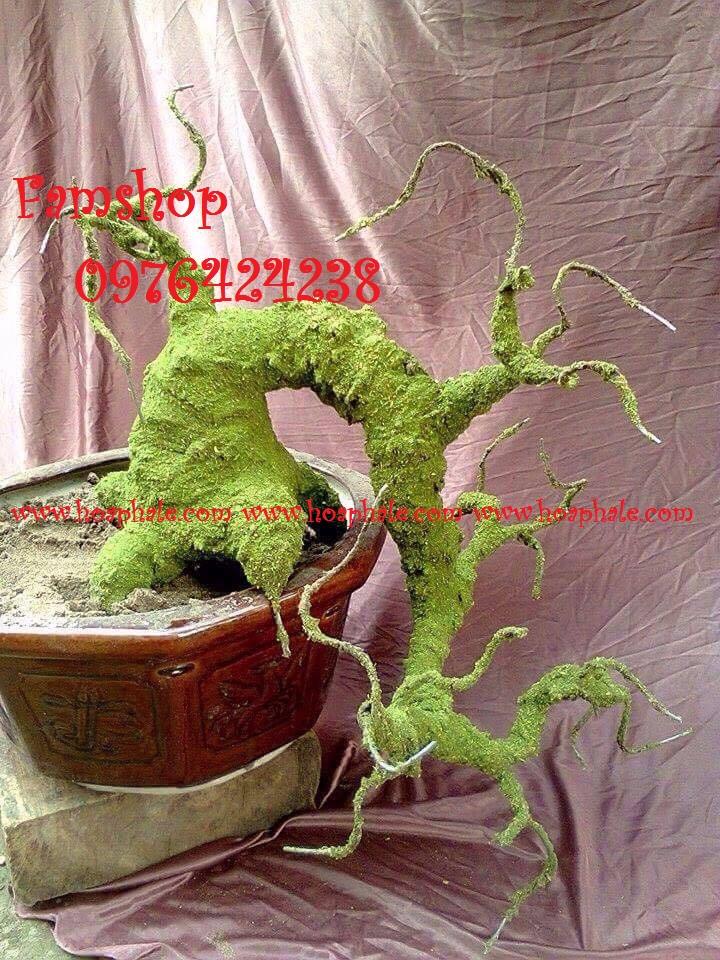 Goc bonsai mai dao tai Tran Duy Hung