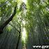 वनों से होने वाले प्रत्यक्ष और अप्रत्यक्ष लाभ