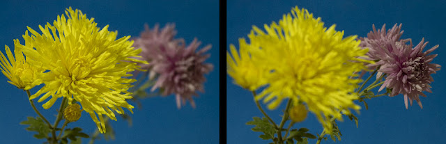images with focus stacking in mind