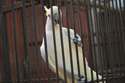 Satwa di kebun binatang cikambulan