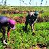 Bentuk Kepedulian, Satgas TMMD Karanganyar Bantu Warga Bersihkan Ladang