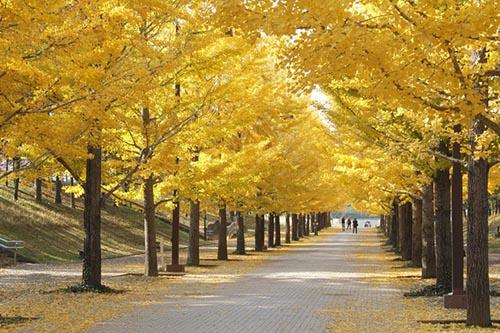 Reviving the golden season in Fukushima - Japan's new tourism route