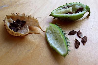 Achocha pods sliced to reveal black seeds