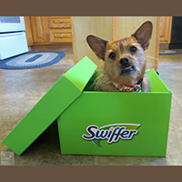 Swiffer Products Review