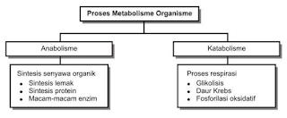 Tabel Proses Metabolisme Organisme