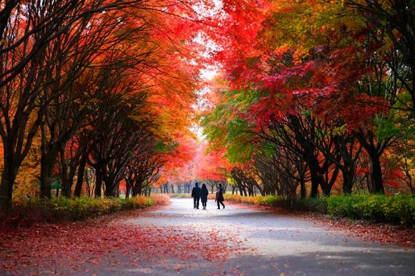 독립기념관, '제3회 단풍나무숲길 힐링축제' 11월9일 개최