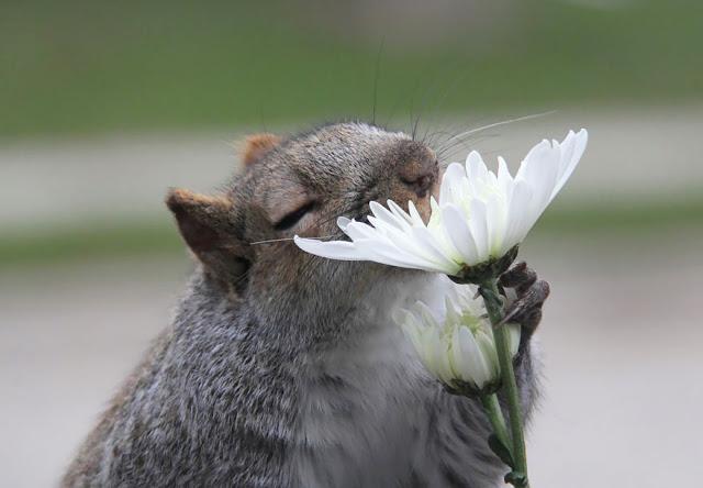 omorfos-kosmos.gr - Χαριτωμένα ζώακια που μυρίζουν λουλούδια (Εικόνες)