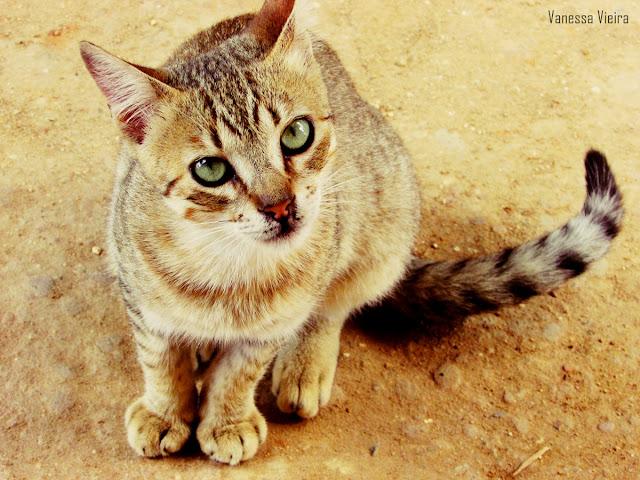 photovanes, gatos, 8on8, natureza, bichinhos, vida, vanessa vieira, fotografia, vanessa vieira fotografia