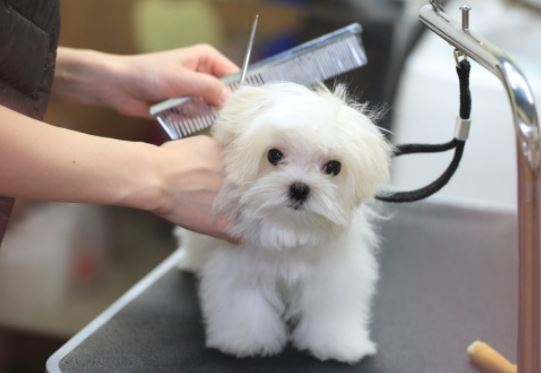 How to Start a Pet Spa from Home