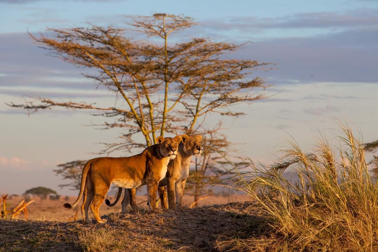Mejor safari en Kenia o Tanzania