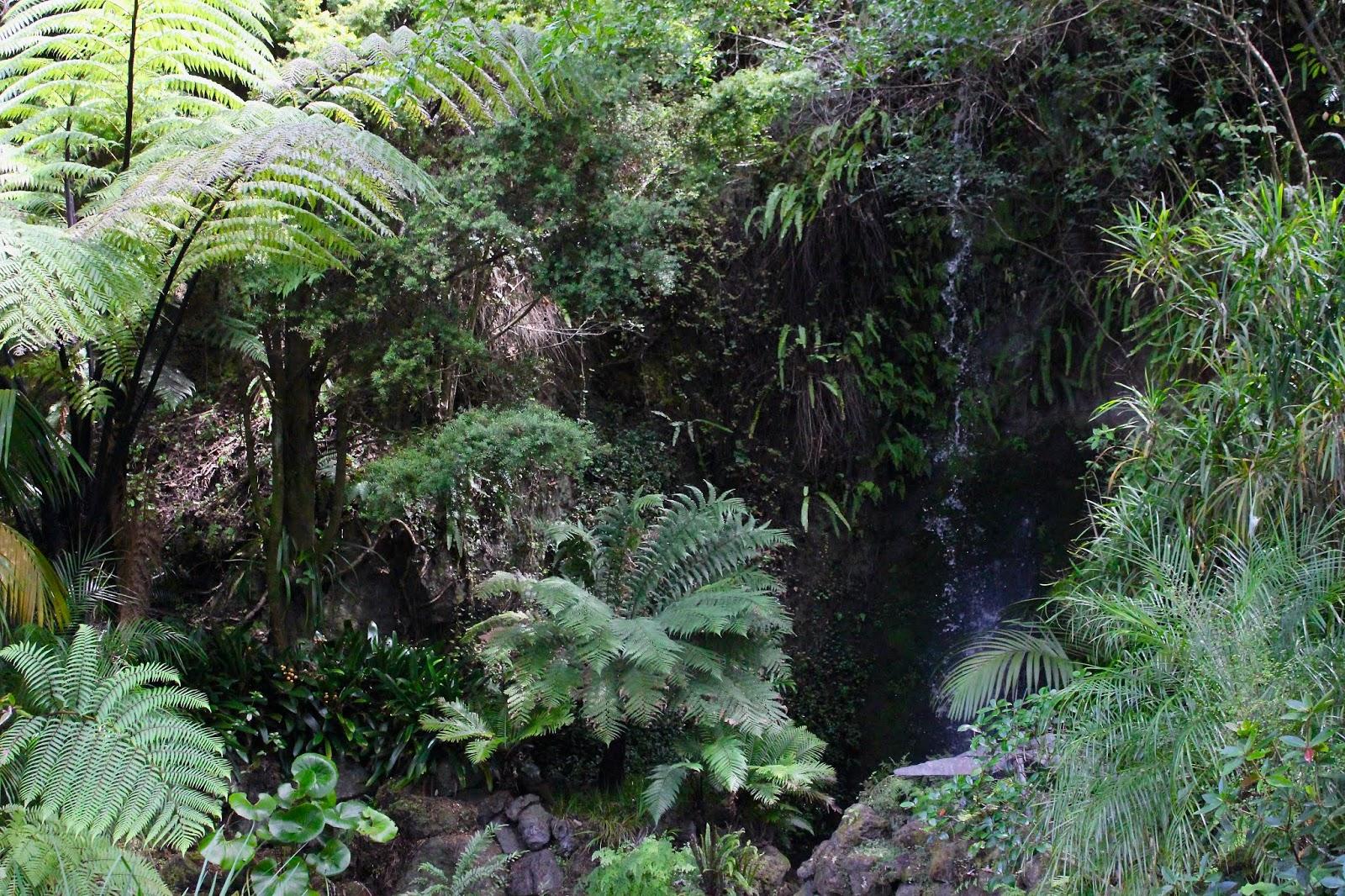 Eden Gardens, Auckland